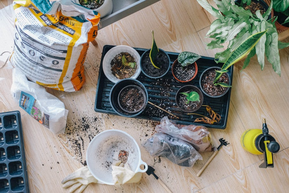 How To Grow Your Own Veg (Even If You Don't Have A Garden)